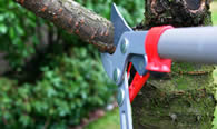 Tree Pruning Services in Olathe KS